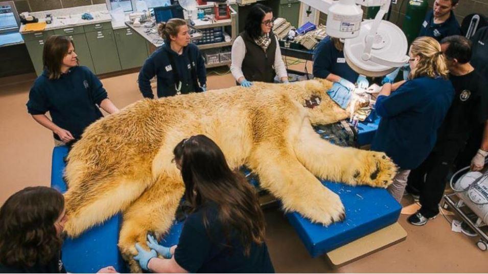 polar bear visits dentist_75511
