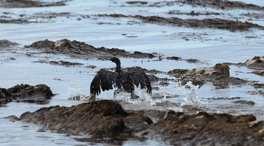 cali oil spill 2015_112913