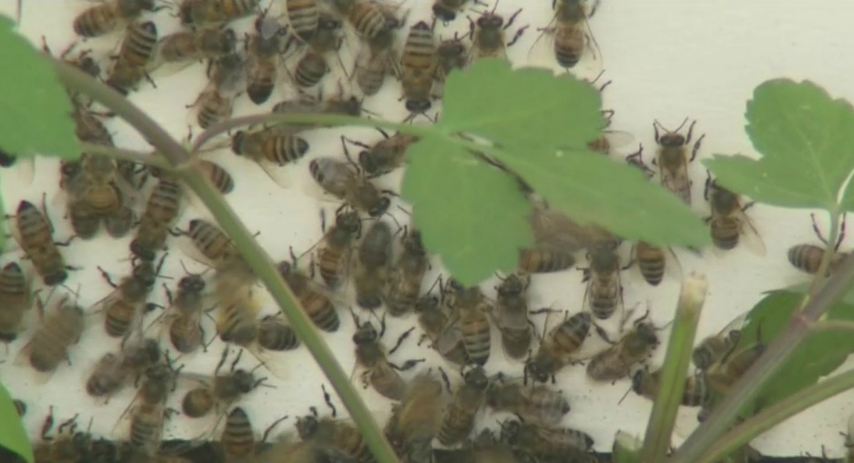 bees_231531