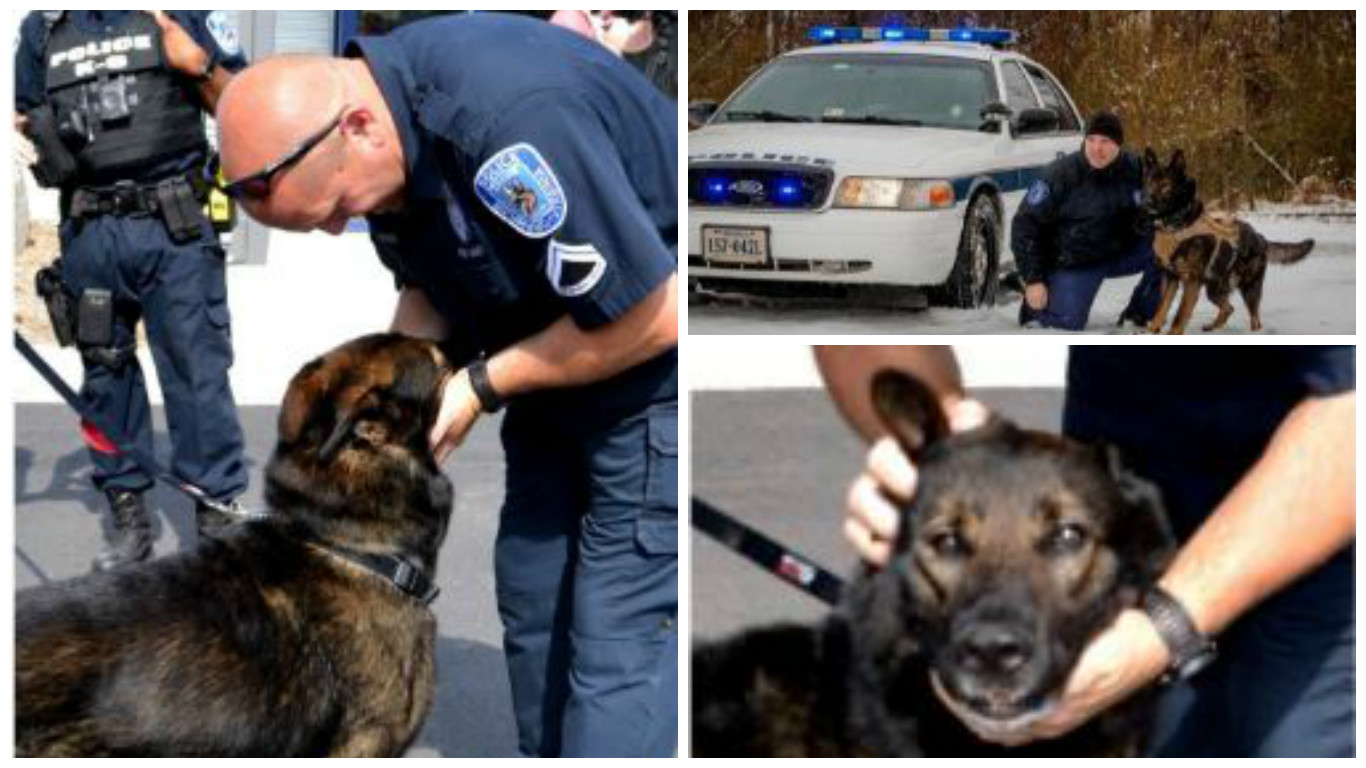 rva-police-canine-died_361356