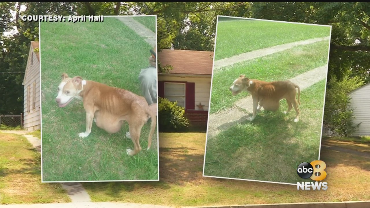 Henrico Woman Charged With Felony Animal Abuse Says She U0026 39 S