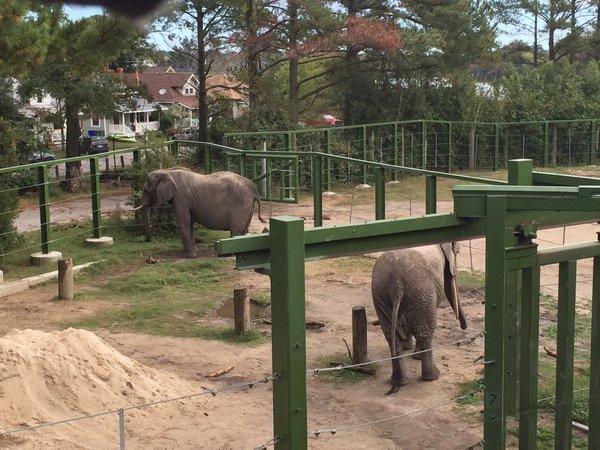 elephant1_468462