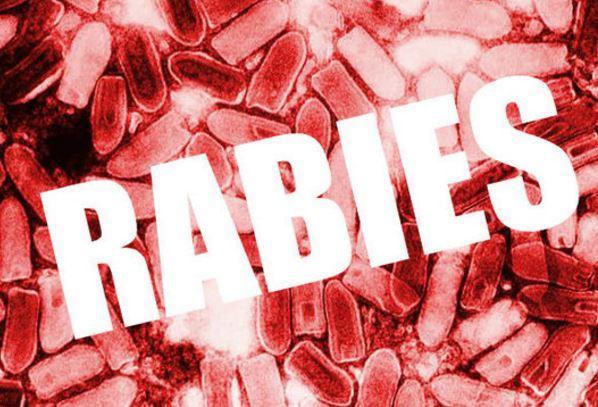 rabiessss_411494