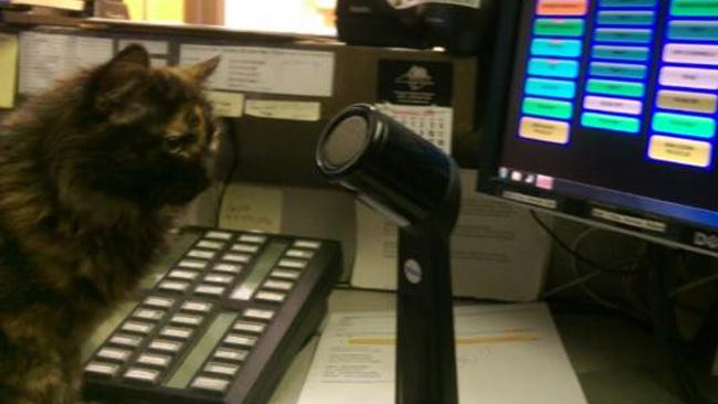 lost kitten_527496