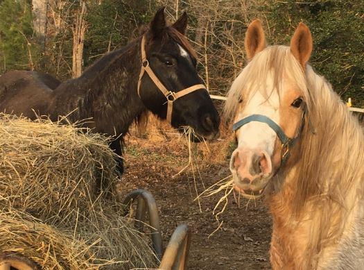 lost pony_542869