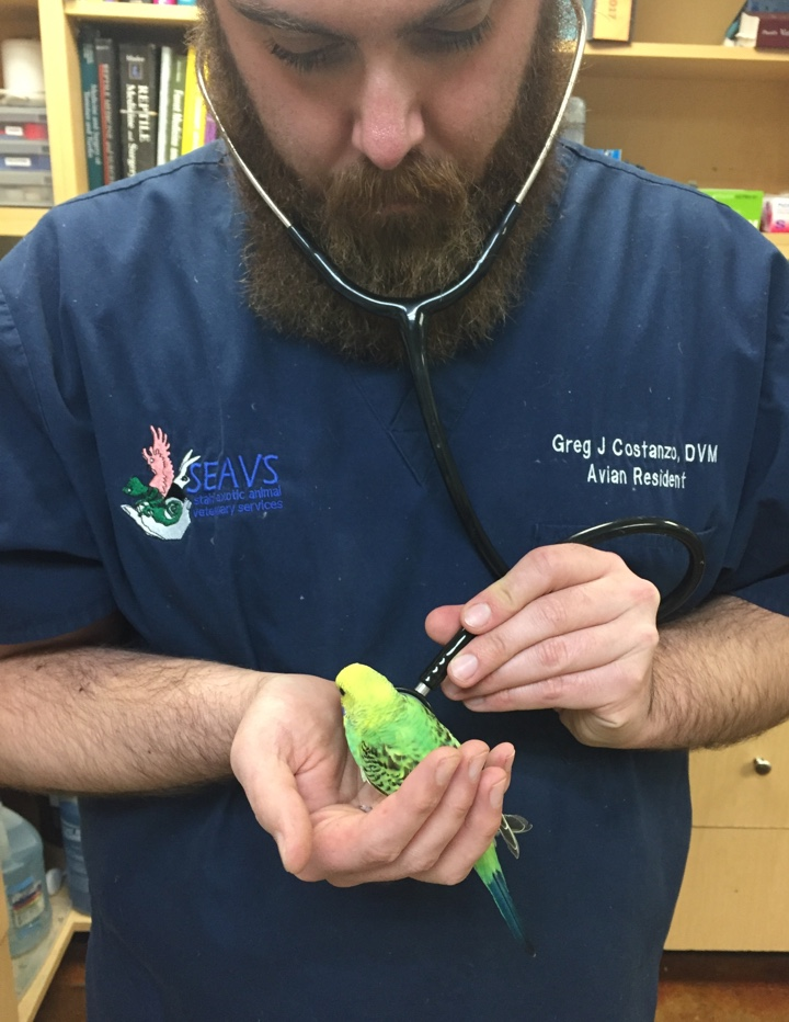 Dr. Greg Costanzo with Stahl Exotic Animal Veterinary Services in Fairfax County donated his time to examine the rescued birds. (Photo: Project Perry)