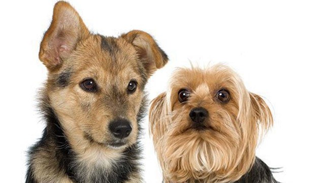 dogspets_39554274_ver1.0_640_360_1523453473732.jpg