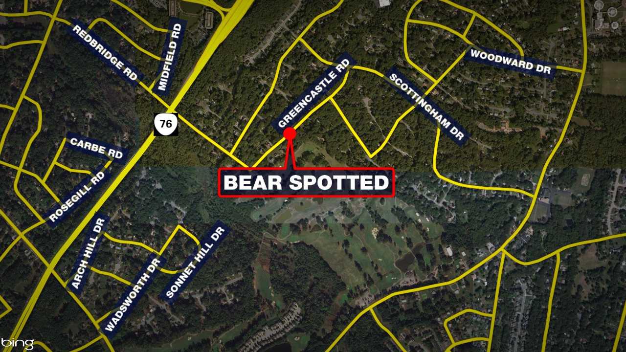 bear spotted_1529408191906.jpg.jpg