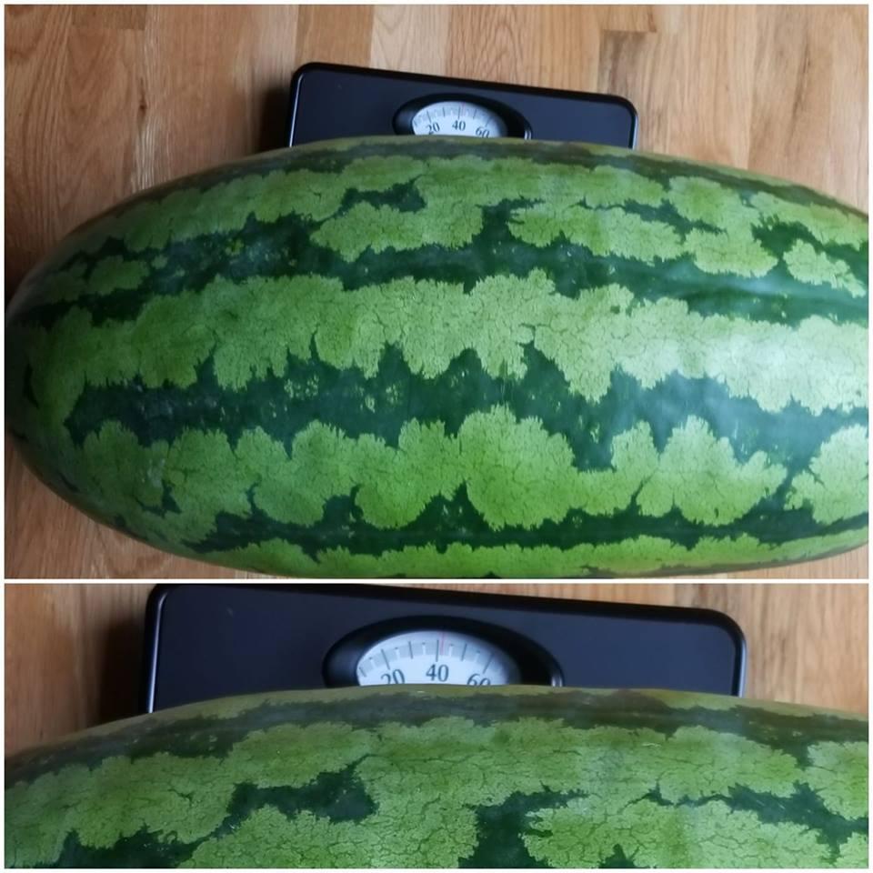 Pathwatermelon