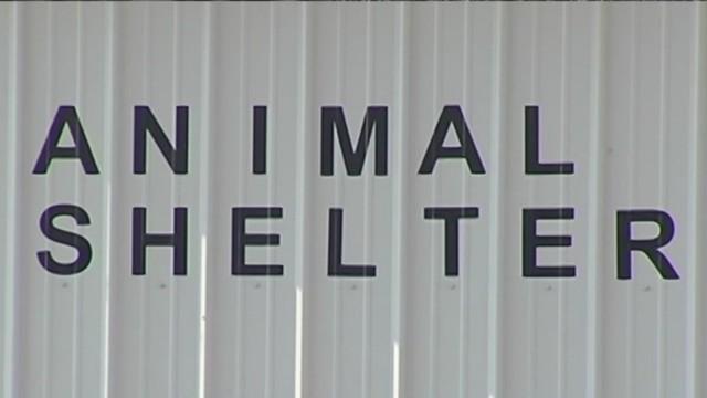 animal shelter_1534269216845.jpg.jpg