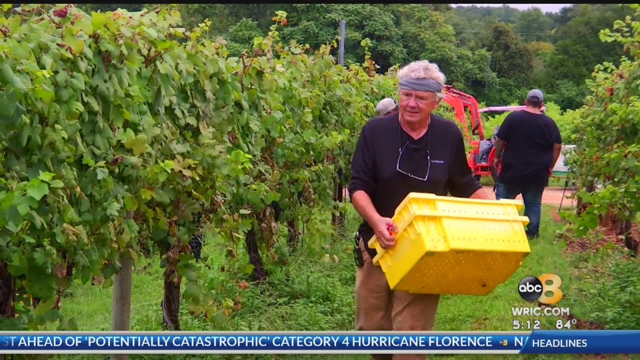 While many of you are stocking up on vino to help you through the storm, they're trying to save the wine at Keswick Vineyards.
