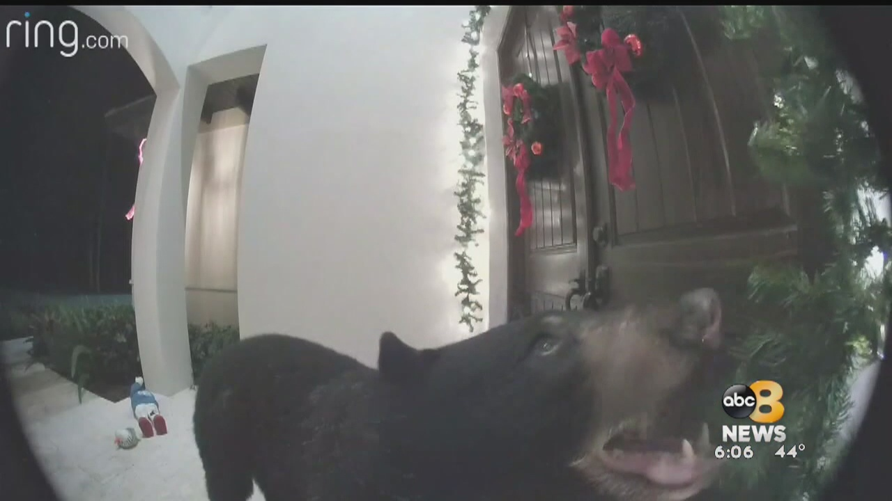 Those popular doorbell cameras are capturing all kind things, including crooks: from shots fired recently in Oregon Hill, a bear ringing a doorbell with his nose in Florida and even a random doorbell licker caught on camera in California.