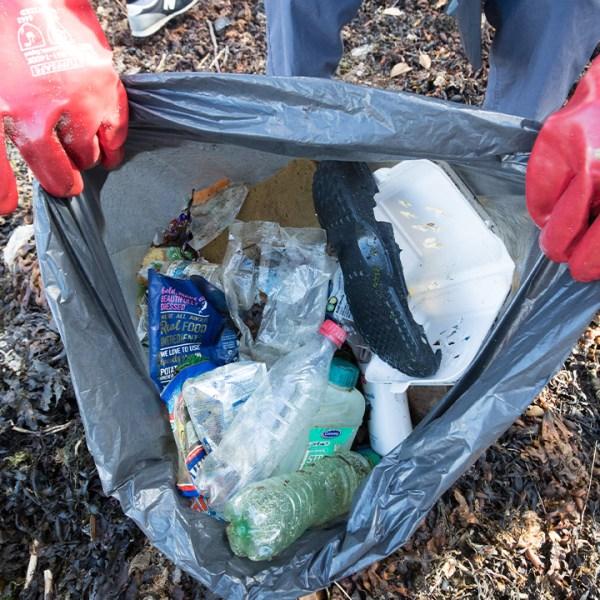litter clean up-846652698