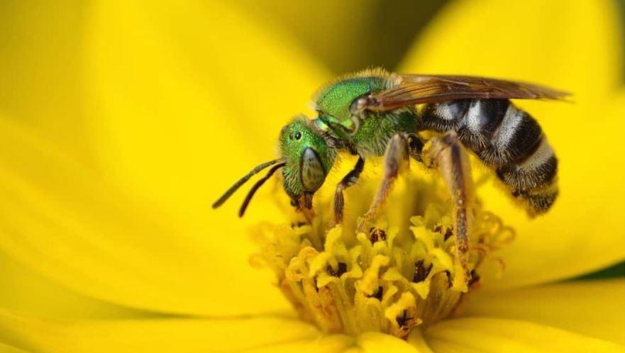 bees 2_1554892085562.JPG.jpg