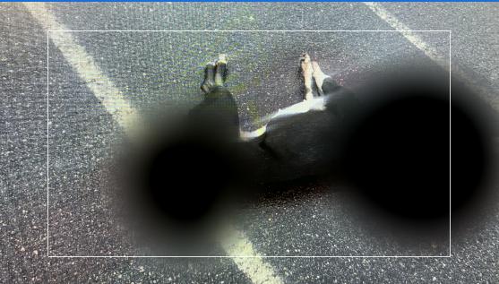 dog death_1557945741911.png.jpg
