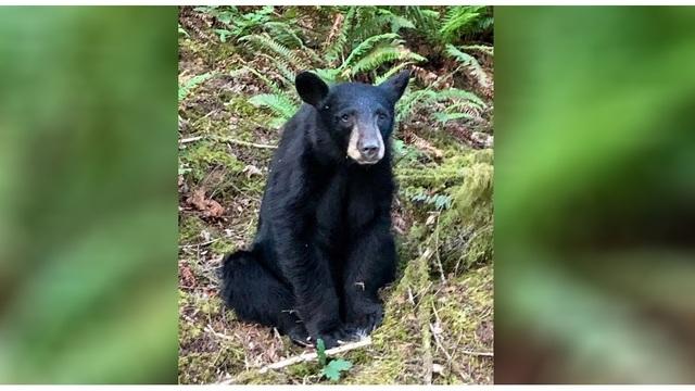 black bear_1560857346048.jpg.jpg