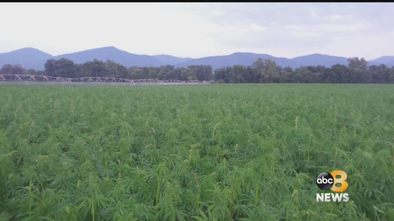 Virginia hemp farm