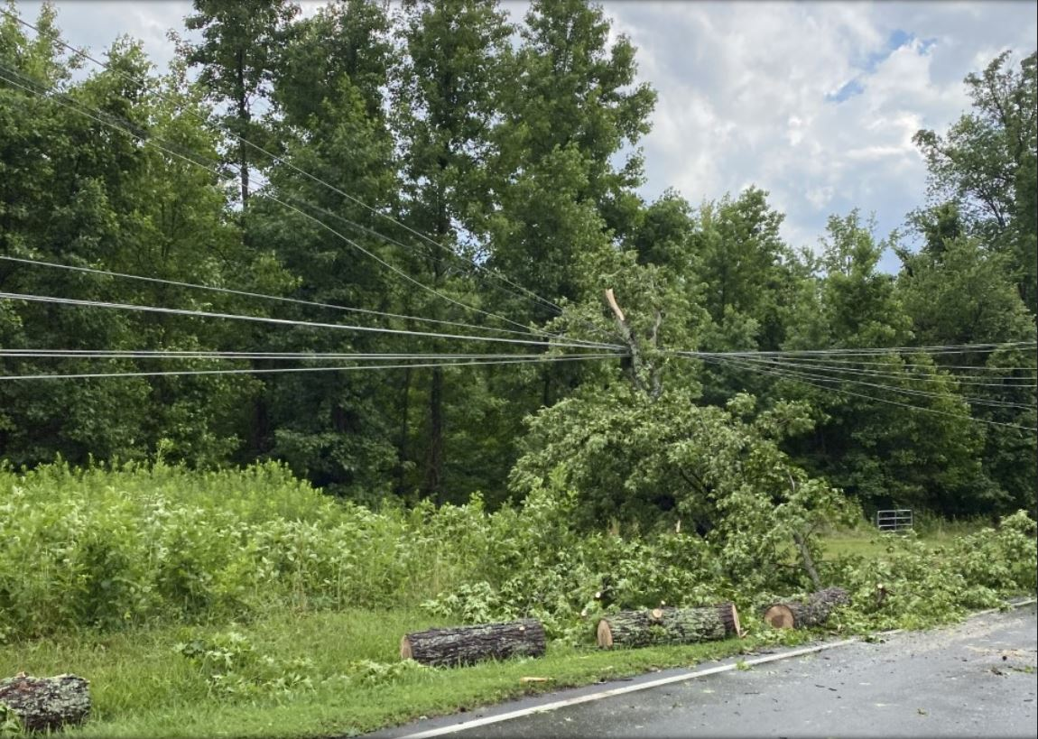 DOWNED_TREE_POWER_LINES