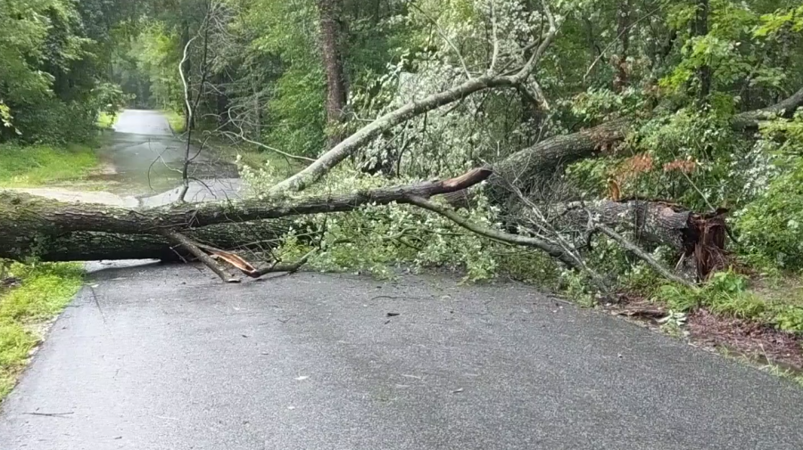 A tree blocks Thurston Road in Chesterfield County