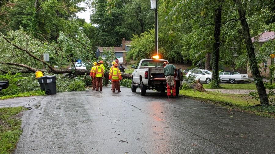 A tree is blocking Rodophil Road