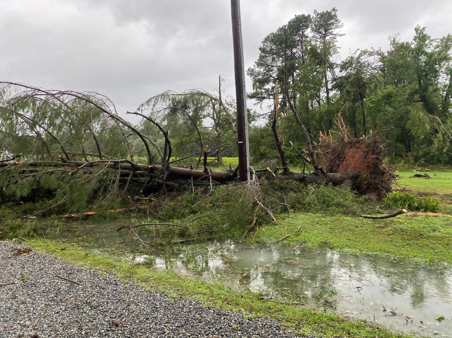 Uprooted tree in Whitestone, Virginia