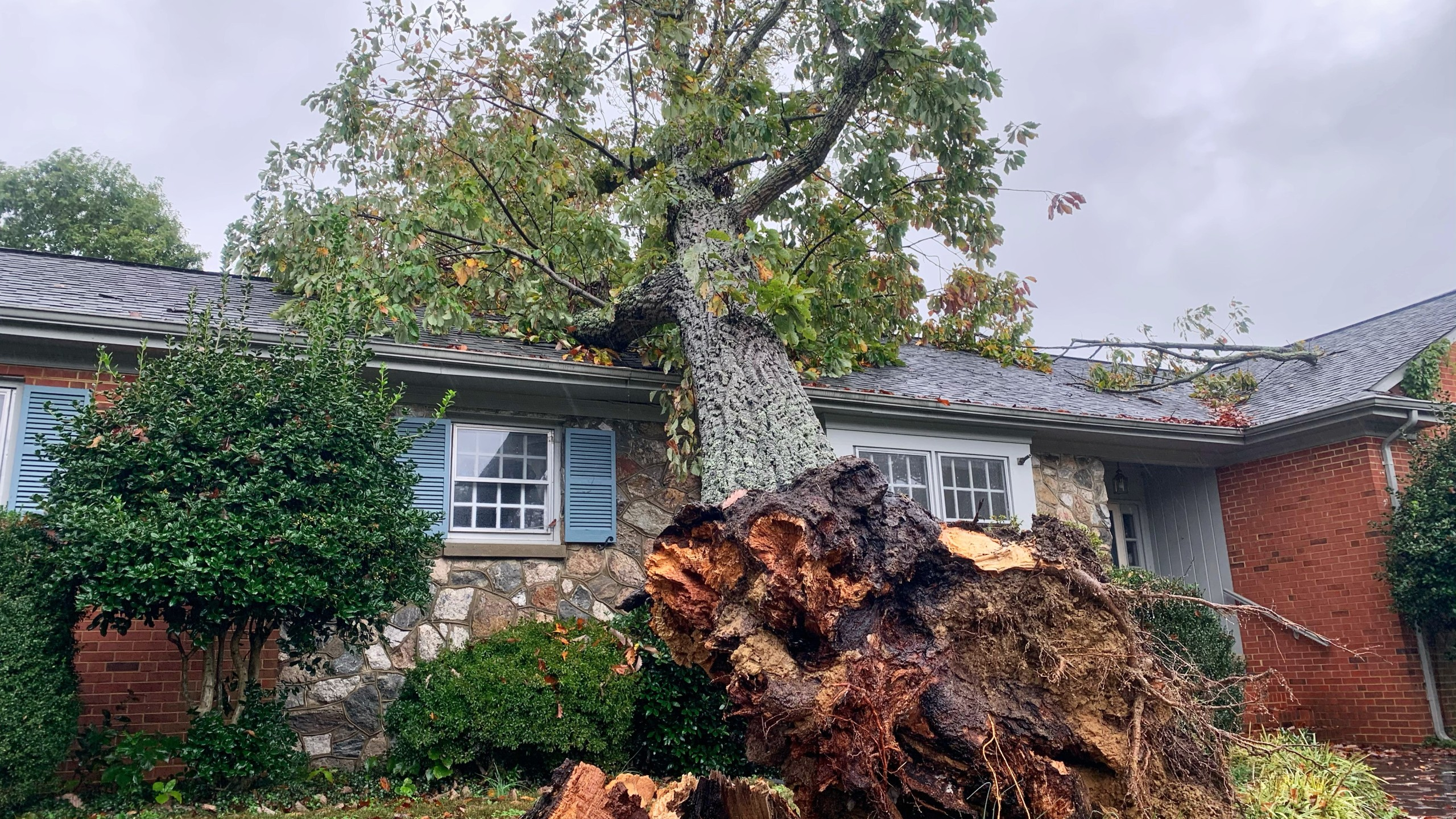 High winds toppled a tree in Bon Air