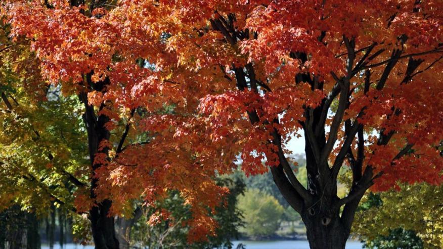 8News Fall Guide