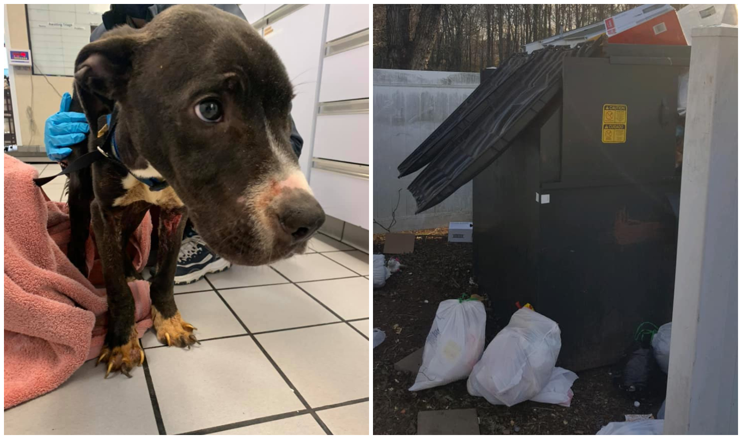 dog found in dumpster