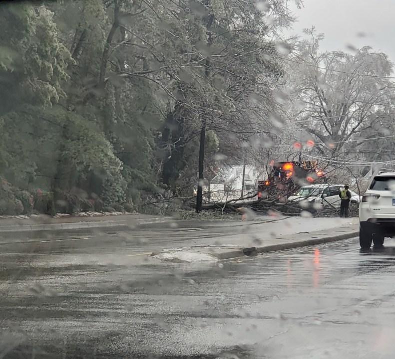 tree falls on van in Petersburg