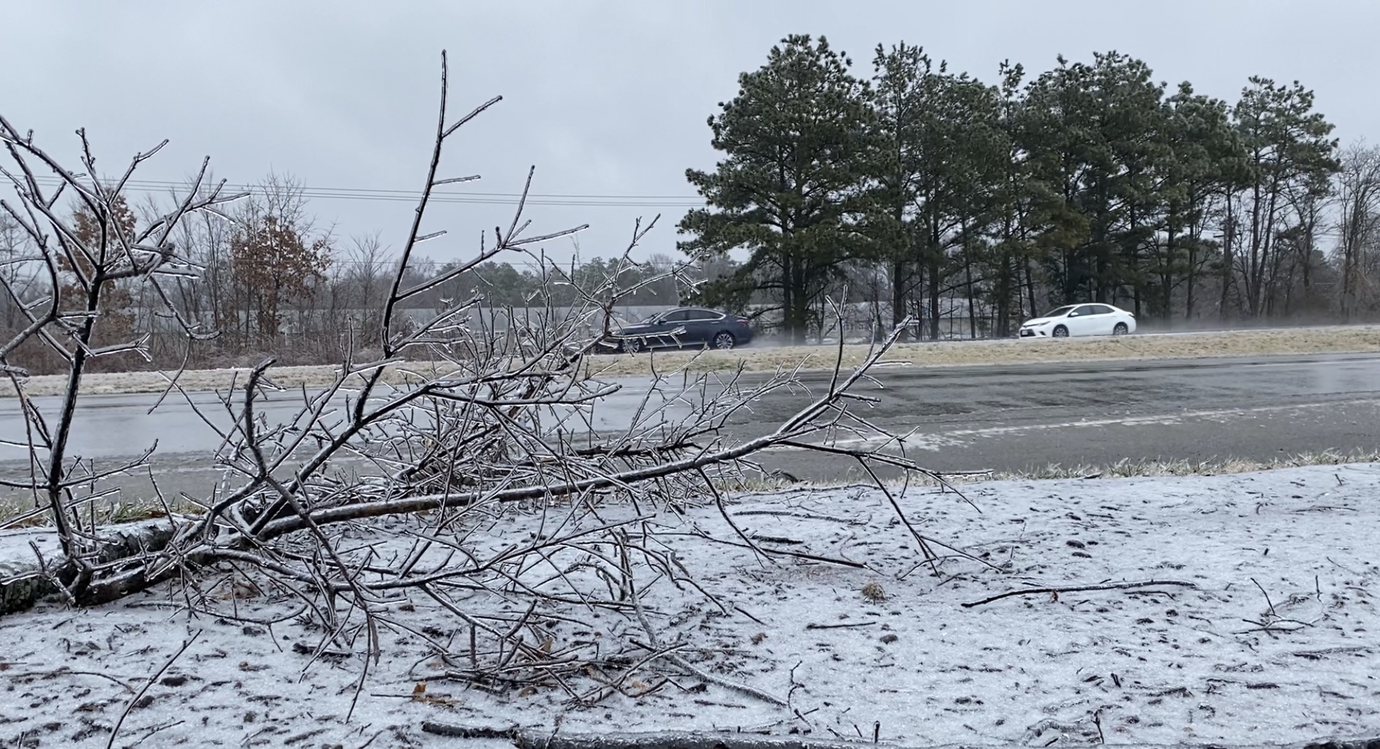 ice on branch along Midlothian Turnpike