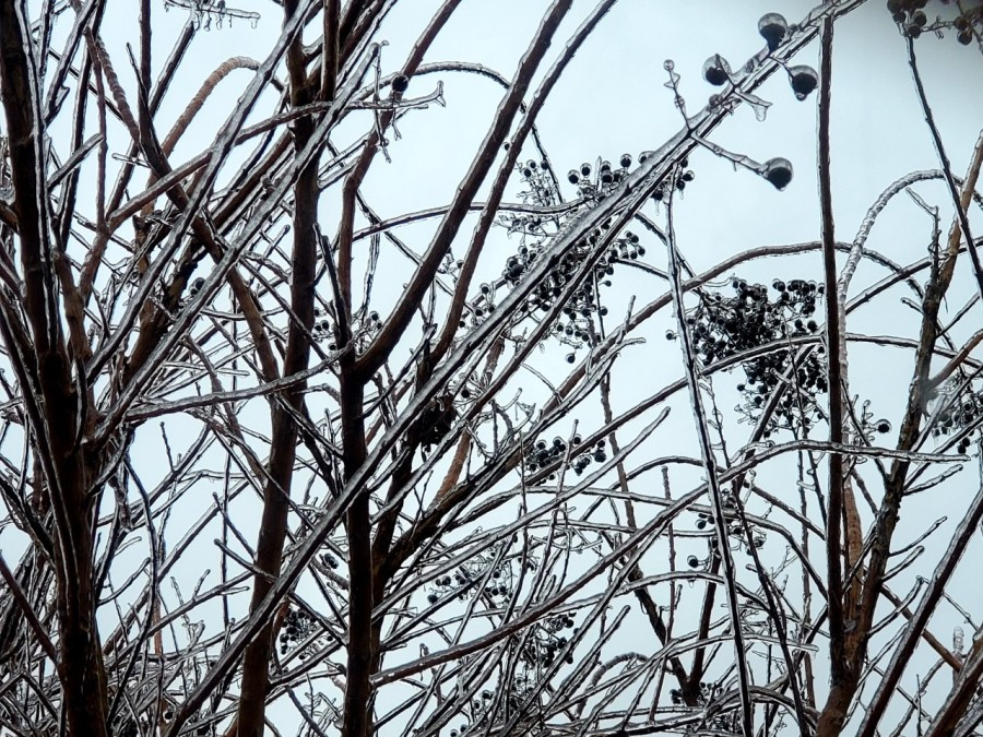 icy branches 3