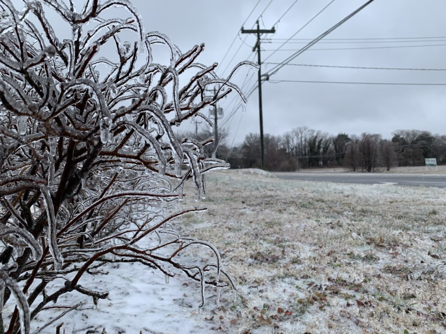Ice consumes a bush in Hanover County. (Photo from 8News' Alex Thorson)