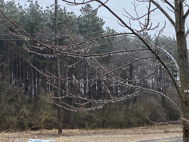 Trees in the Northern Neck are feeling the effects of the winter weather. (Photo from Will Lewis)