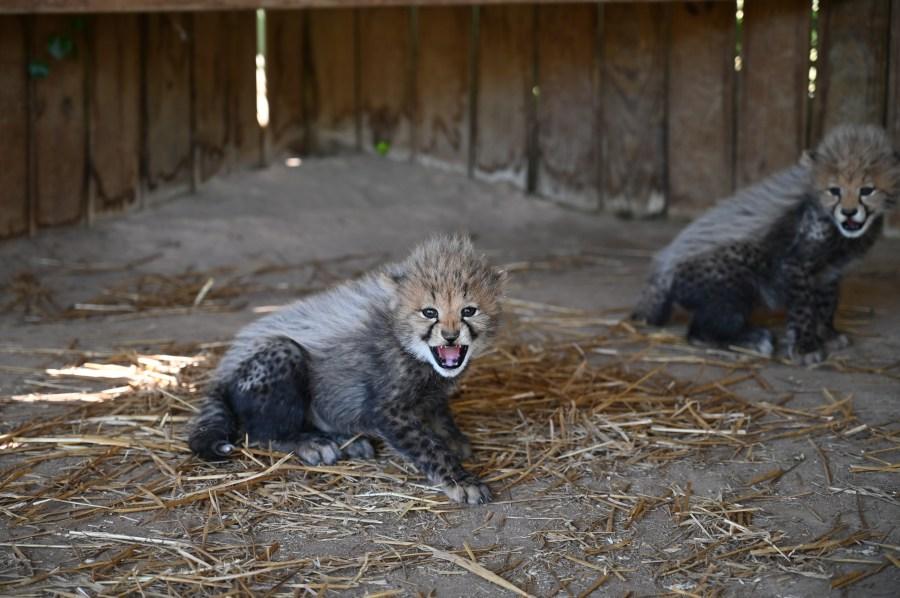 Rey's Cubs