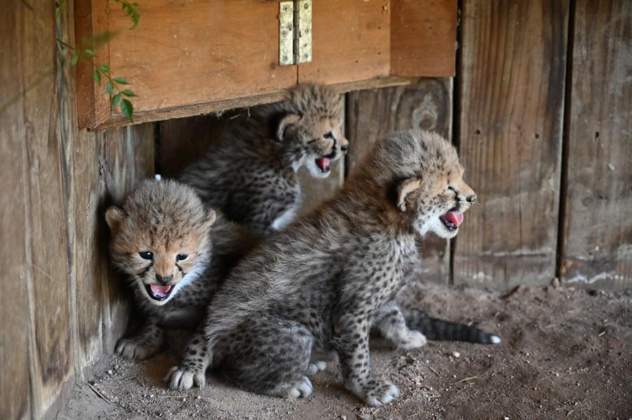 Valia's Cubs 2