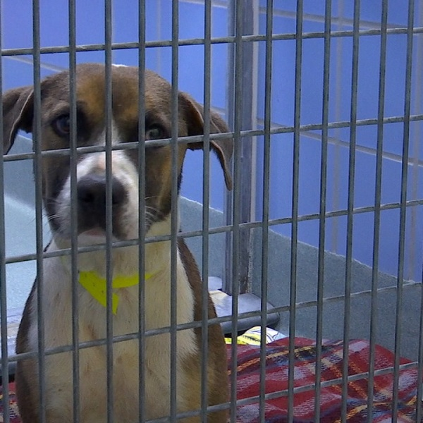 Richmond SPCA dog rescued from Ida
