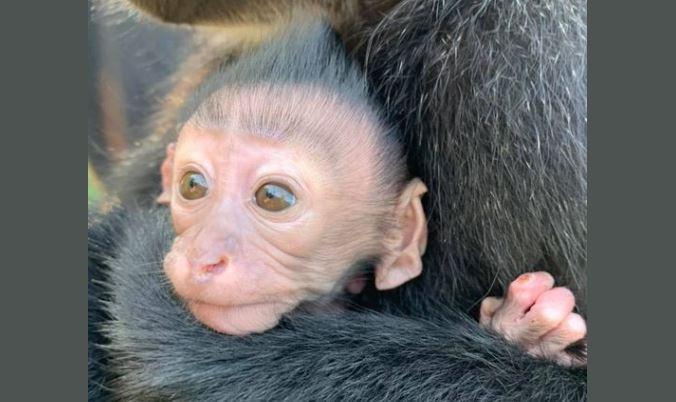 Metro Richmond Zoo welcomes monkey